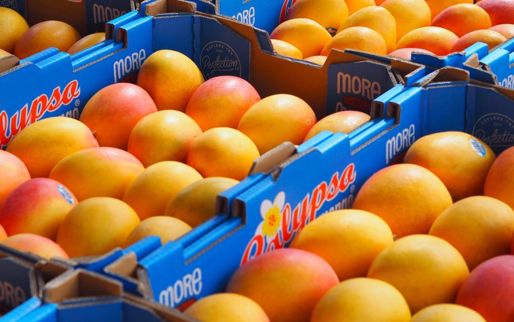 mangoes for juicing