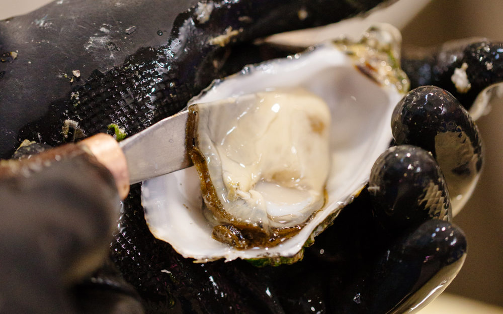 Oysters from Dandenong Market